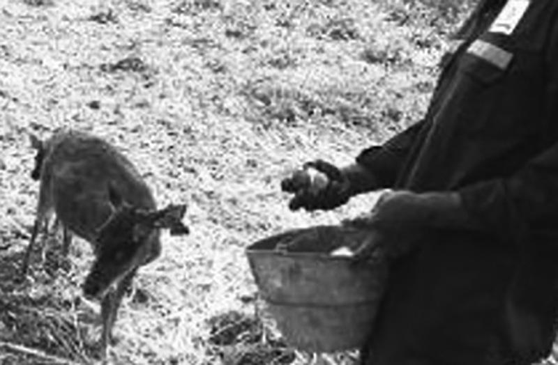 Perhutani Bojonegoro Post Penangkaran Malo 31 Rusa 25 Januari 2017