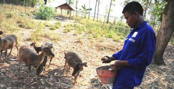 Rusa Bojonegoro Jadi Sasaran Kunjungan Pelajar Penangkaran Kab