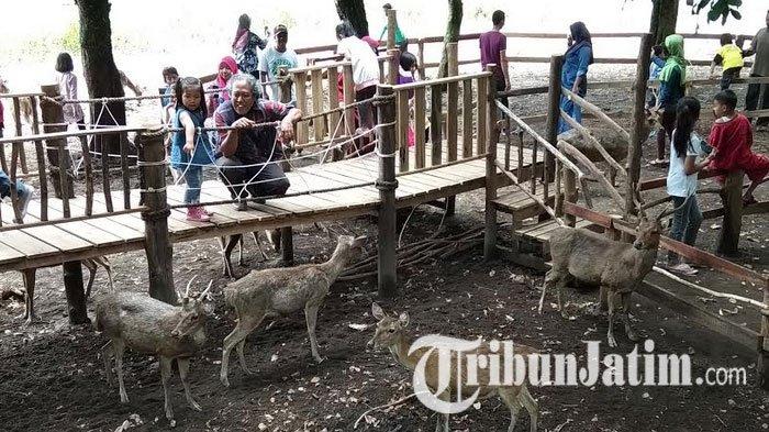 Wisata Penangkaran Rusa Maliran Blitar Bersolek Pengunjung Lebih Nyaman Melihat