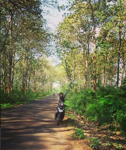 30 Tempat Wisata Bojonegoro Jawa Timur Terpopuler Hutan Jati Wana