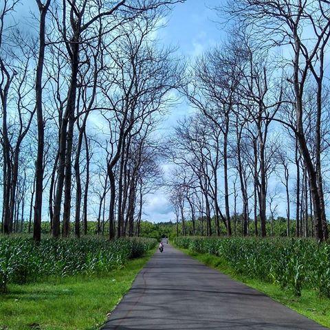 Keindahan Wana Wisata Dander Bojonegoro Kab