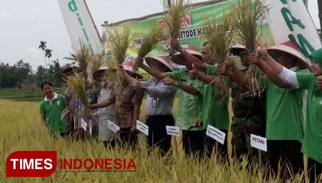 Bondowoso Kembangkan Pertanian Organik Times Indonesia Desa Wisata Kab