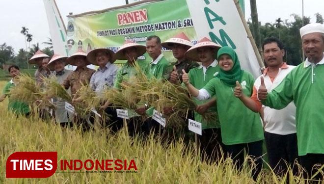 Bondowoso Panen Padi Organik Times Indonesia Desa Wisata Kab