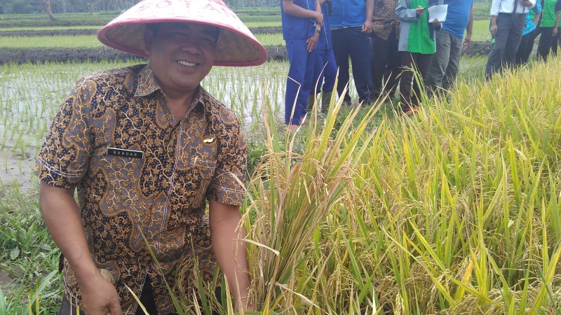Daerah Disperta Bondowoso Optimalisasi Lahan Organik Lombok Kulon Desa Wisata
