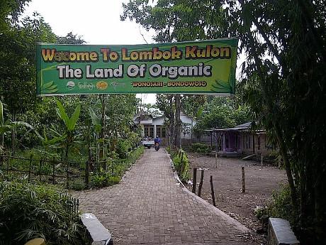 Desa Wisata Organik Bondowoso Menikmati Kab