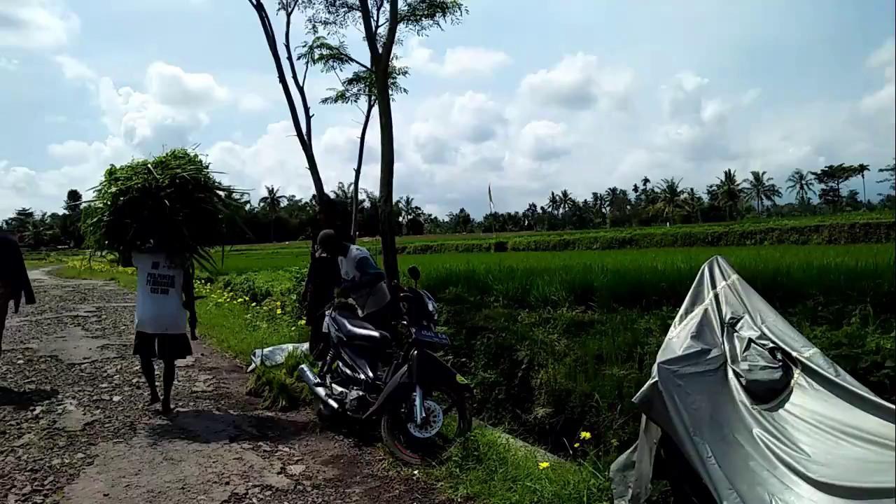 Desa Wisata Organik Lombok Kulon Bondowoso Pertanian Berkelanjutan Kel 1