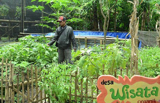 Kabupaten Bondowoso Kembali Konversi Lahan Pertanian Menjadi Organik Desa Wisata