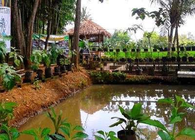 Kuliner Sehat Kampung Organik Bondowoso Menikmati Desa Wisata Kab