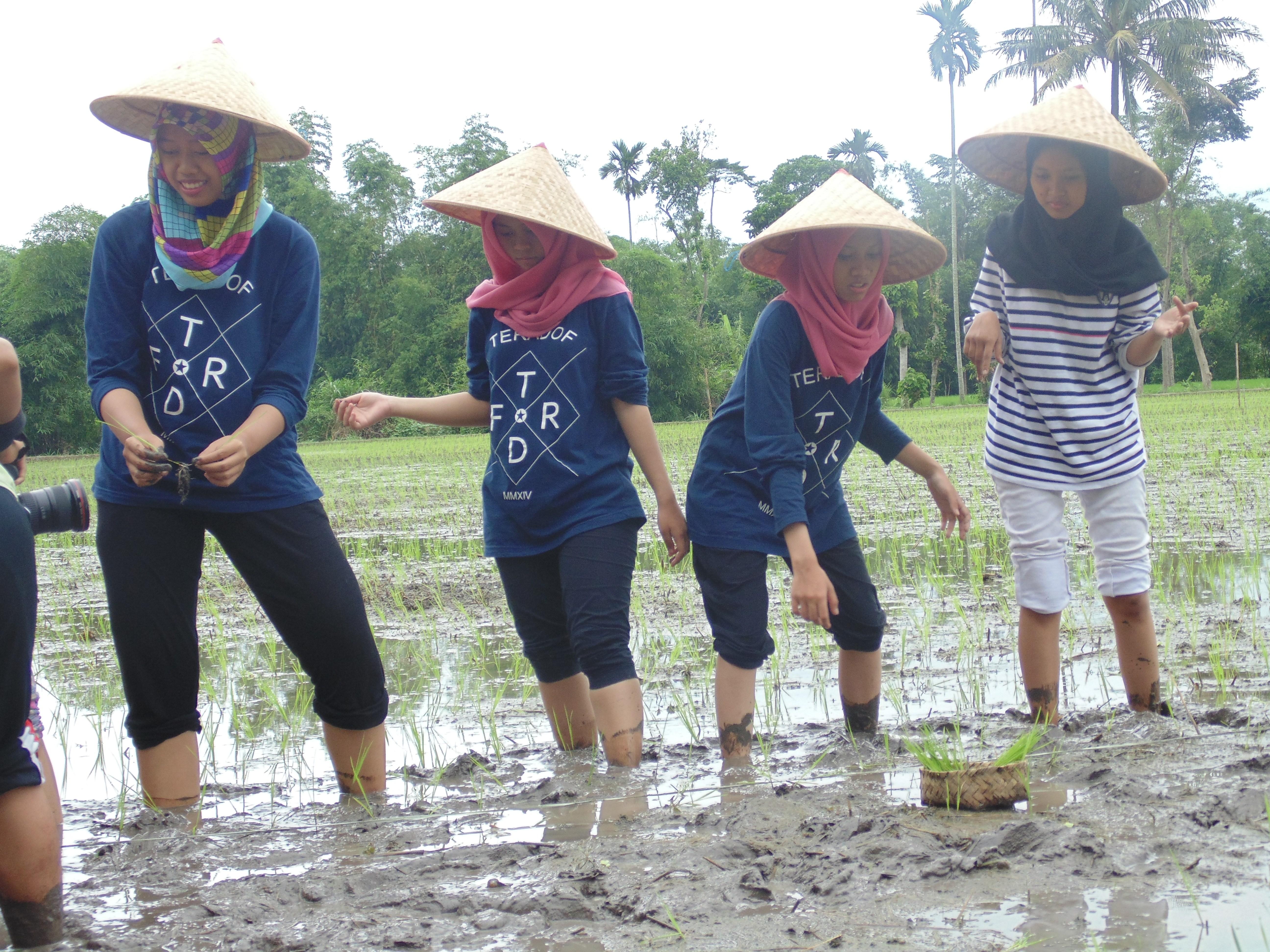 Kunjungan Naik Desa Wisata Organik Lombok Kulon Berbenah Memo Bondowoso