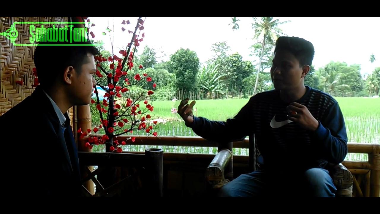 Pertanian Desa Wisata Organik Lombok Kulon Kec Wonosari Bondowoso Unej
