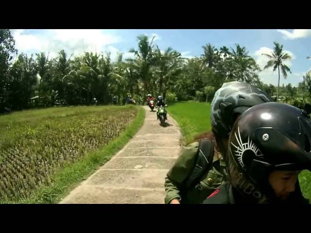 Pertanian Padi Organik Desa Wisata Lombok Kulon Bondowoso Bkrc Jawa