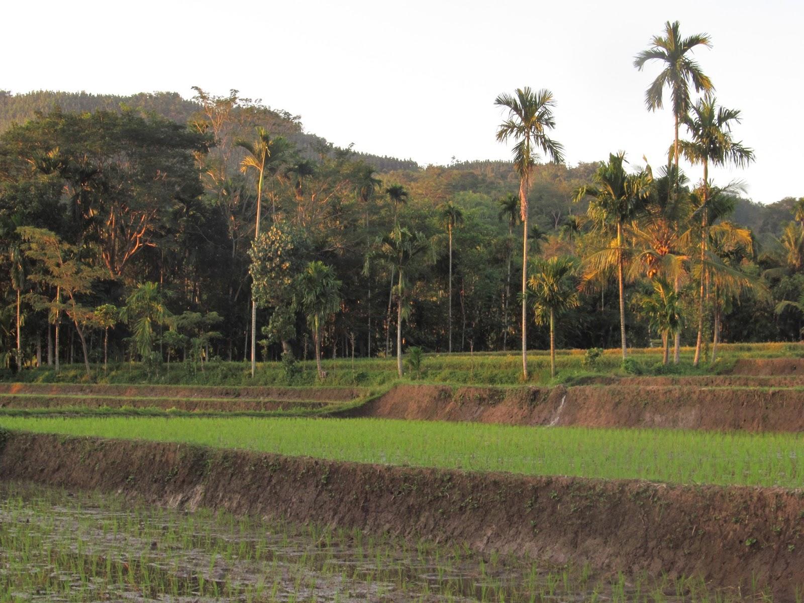 Sulek Desa Pengrajin Bambu Bondowoso Gus Bolang Terlatak Kacamatan Tlogosari