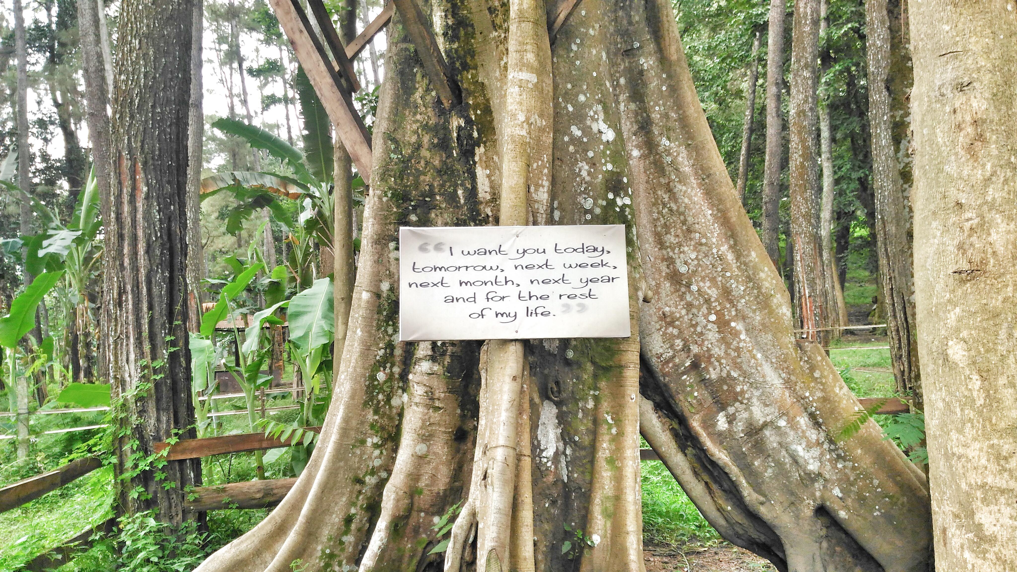 Hutan Pinus Bertabur Pesan Cinta Tasnan Forest Bondowoso Dian Ravi