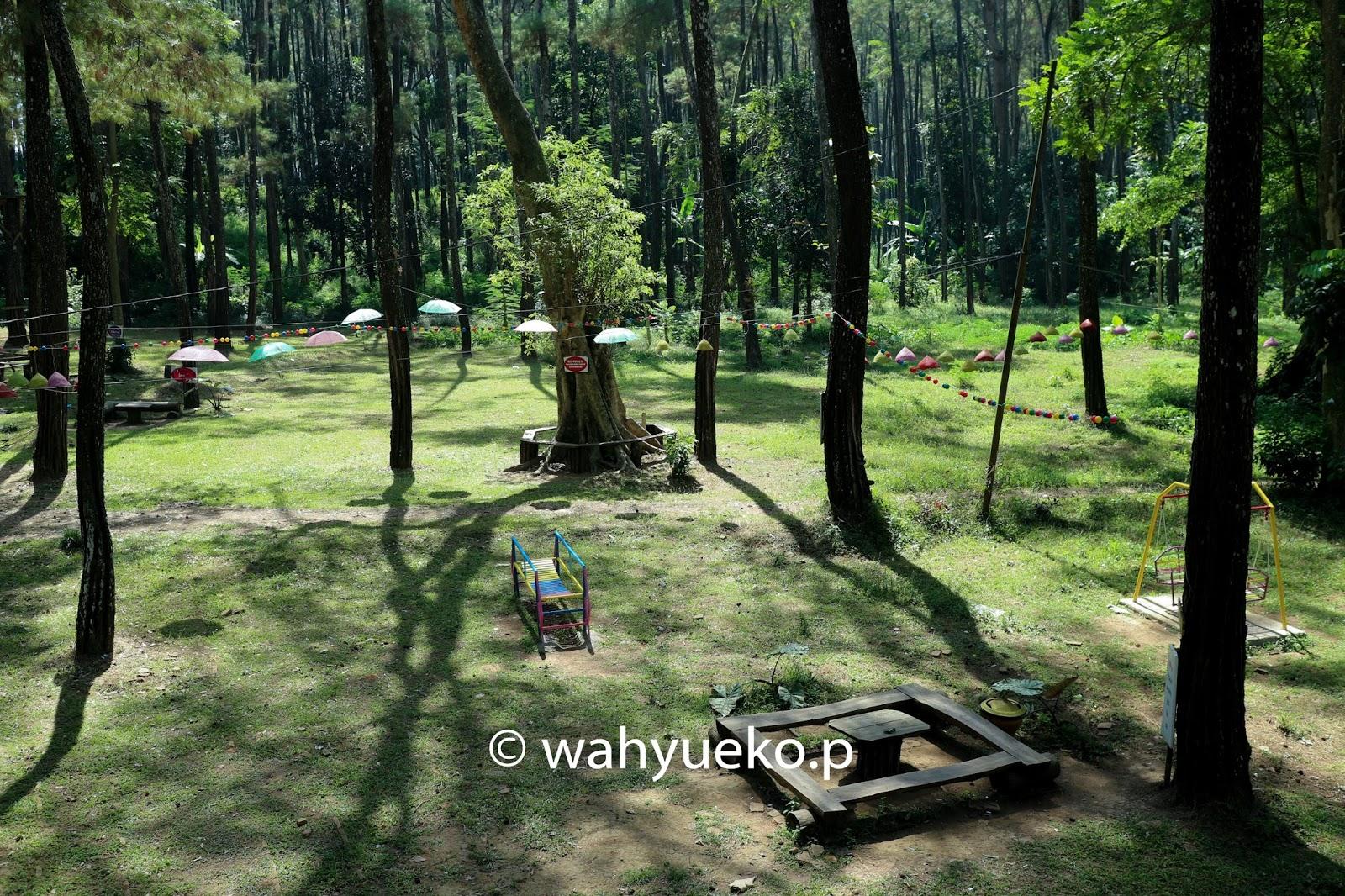 Hutan Tasnan Cerita Citra Bondowoso Bisa Tempat Bermain Cukup Komplit