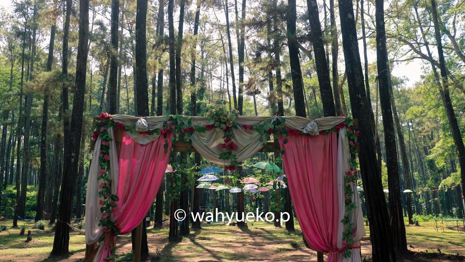 Hutan Tasnan Cerita Citra Bondowoso Iya Terletak Desa Taman Kec
