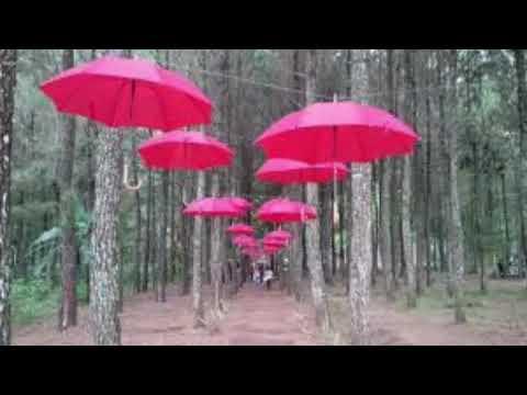 Tasnan Bondowoso Youtube Hutan Kab