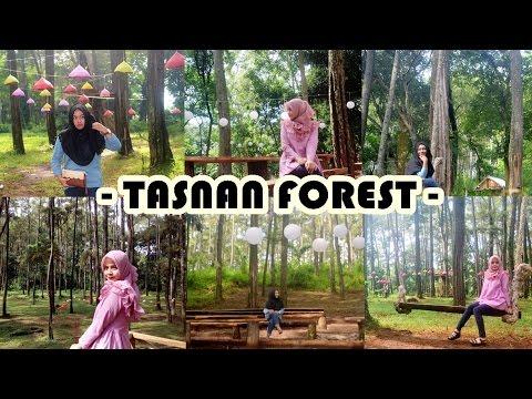 Tasnan Forest Bondowoso Jawa Timur Youtube Hutan Kab