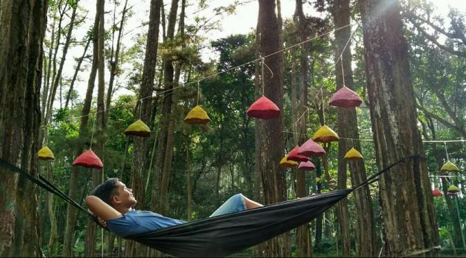 Hutan Pinus Tasnan Sejuknya Alam Bondowoso Food Travel Bintang Jawa