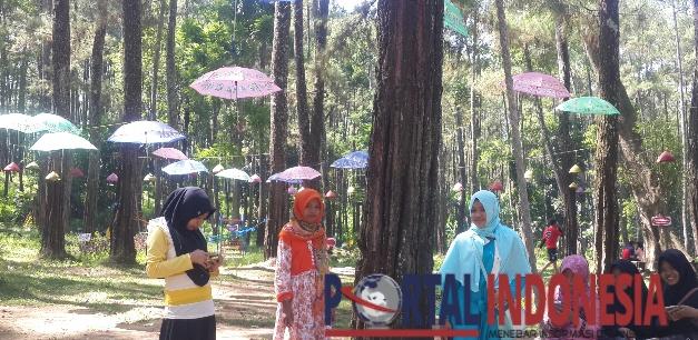 Tasnan Forest Bondowoso Hadir Wajah Portal Indonesia Pemandangan Faorest Tamanan
