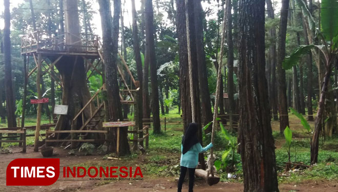 Tasnan Forest Suguhkan Hutan Pinus Berlampion Times Indonesia Bigvl2 Jpg