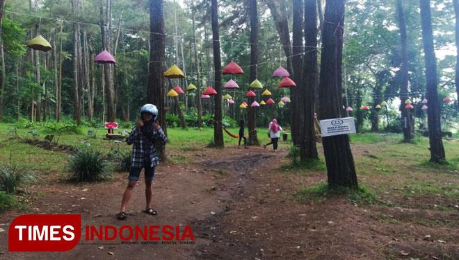 Tasnan Forest Suguhkan Hutan Pinus Berlampion Times Indonesia Cdixwg Jpg