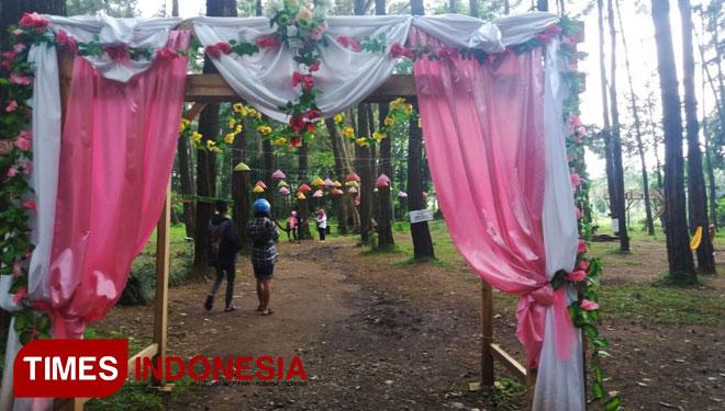 Tasnan Forest Suguhkan Hutan Pinus Berlampion Times Indonesia Suasana Wisata