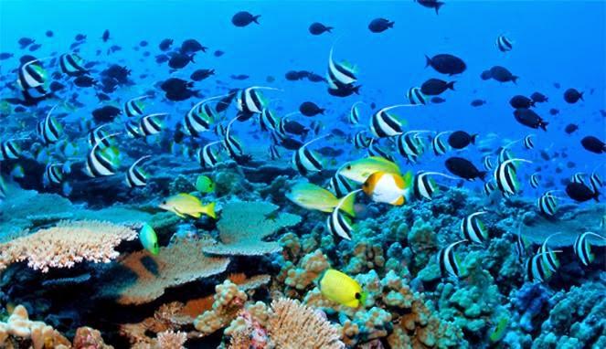 Aaa Jpg Sumber Gorontaloparadise Blogspot Taman Wisata Laut Olele Kab