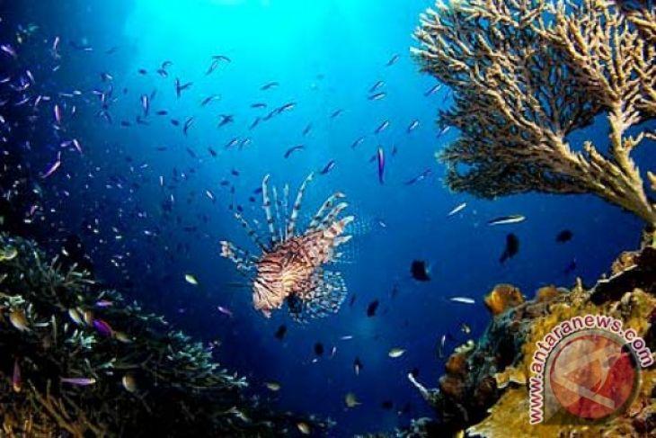 Bupati Inginkan Taman Laut Olele Dikenal Dunia Antara News Gorontalo