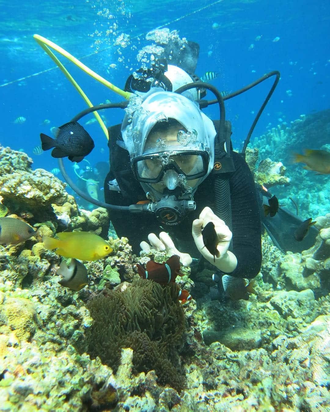 Destinasi Wisata Sulawesi Wajib Dikunjungi Taman Laut Olele Kab Bone