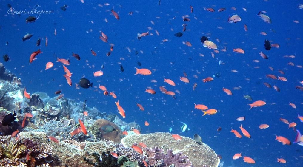 Falling Fishes Batu Bolong Life Absurd Journey Merasakan Sensasi Ikan