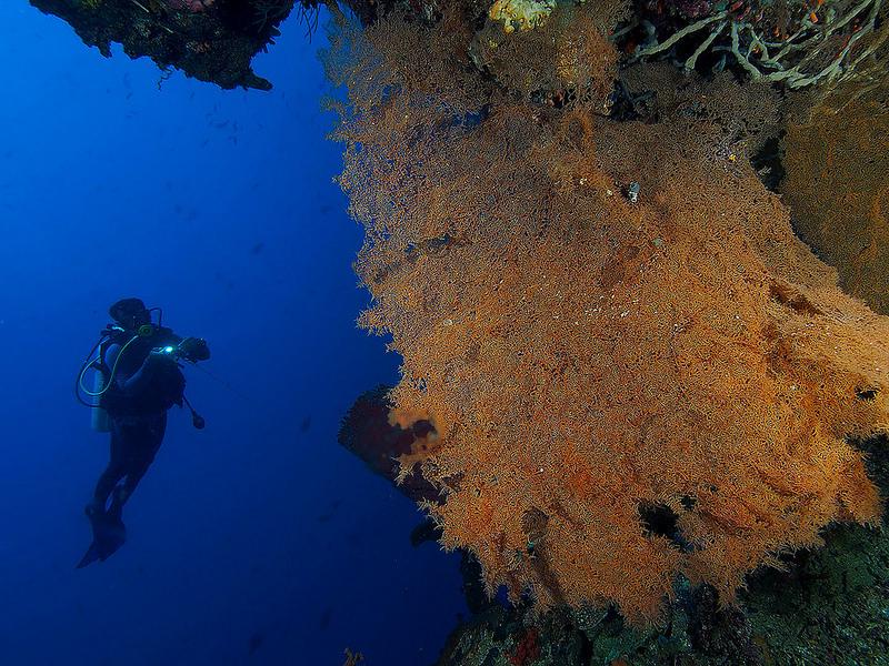 Greatness Indonesia 49 Foto Menakjubkan Wisata Bawah Laut Desa Apakah