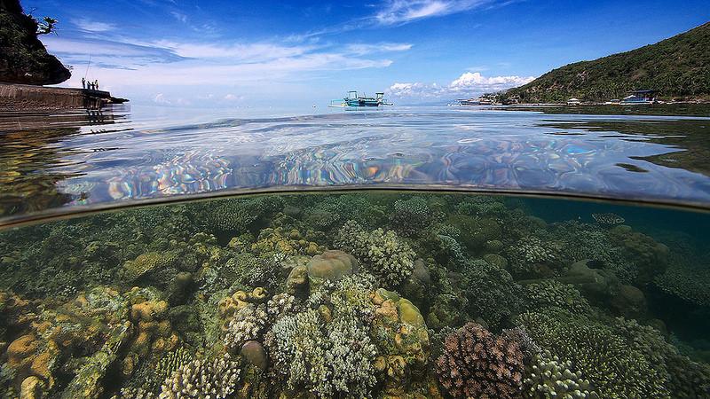 Greatness Indonesia 49 Foto Menakjubkan Wisata Bawah Laut Desa Olele