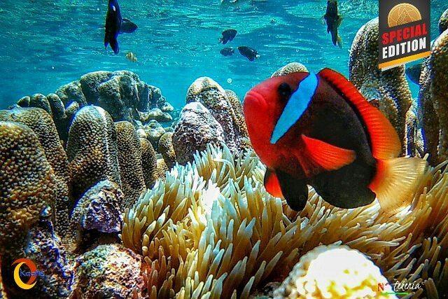 Gto Taman Laut Olele Sebuah Obyek Wisata Bahari Desa Kecamatan
