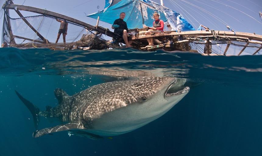 Hiu Paus Kwatisore Kapal Nelayan Jpg 15 Tempat Wisata Menarik