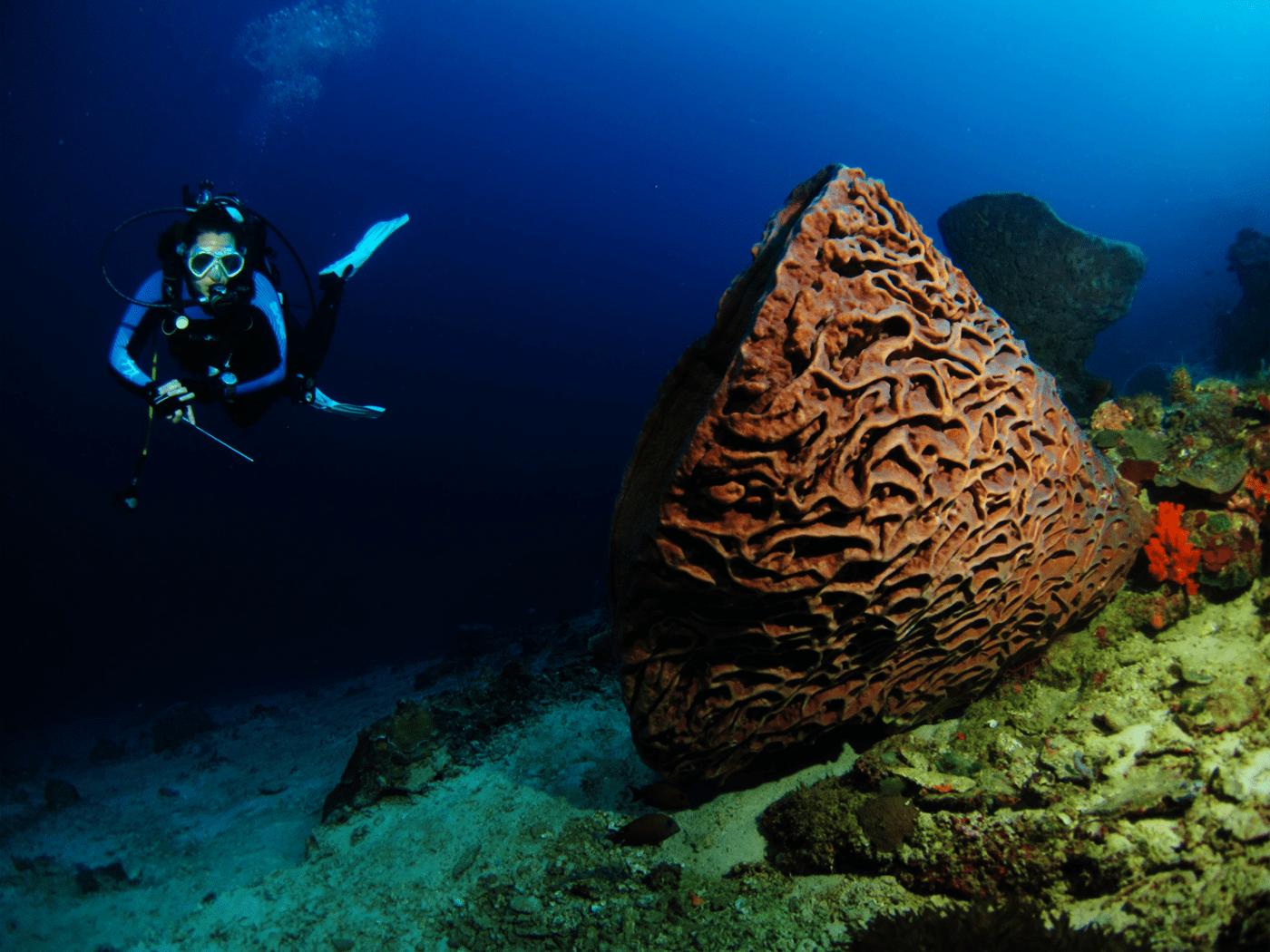 Inilah Hidden Paradise Gorontalo Pesona Taman Wisata Laut Olele Kab