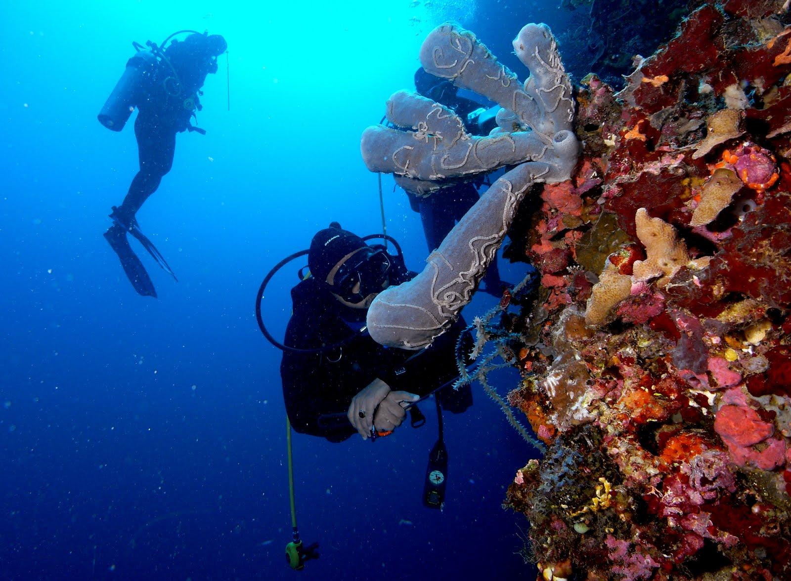 Keindahan Bawah Laut Gorontalo Taman Wisata Olele Kab Bone Bolango
