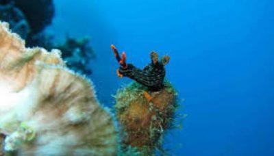 Keindahan Taman Laut Olele Bawah Gorontalo Wisata Tanahair Kab Bone