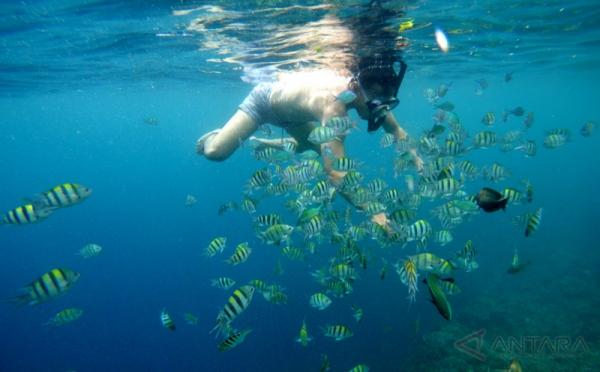 Keindahan Taman Laut Olele Gorontalo Target Wisatawan Melakukan Selam Permukaan