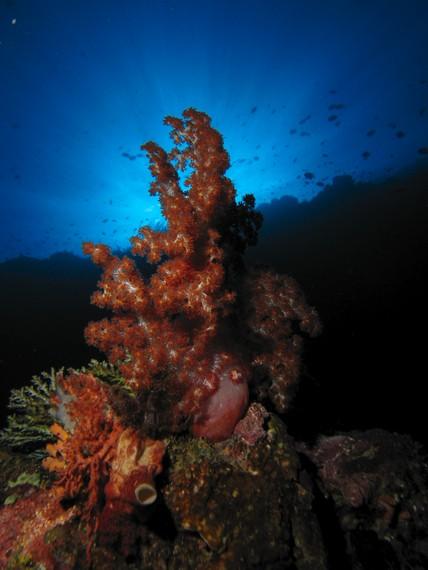 Keindahan Tersembunyi Kedalaman Taman Laut Olele Indonesiakaya Eksplorasi Budaya Zamrud