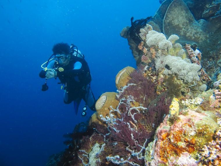 Keindahan Tersembunyi Kedalaman Taman Laut Olele Indonesiakaya Lestari Kayanya Biota
