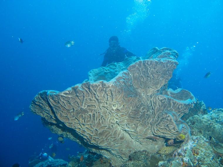 Keindahan Tersembunyi Kedalaman Taman Laut Olele Indonesiakaya Rose Salvador Dali