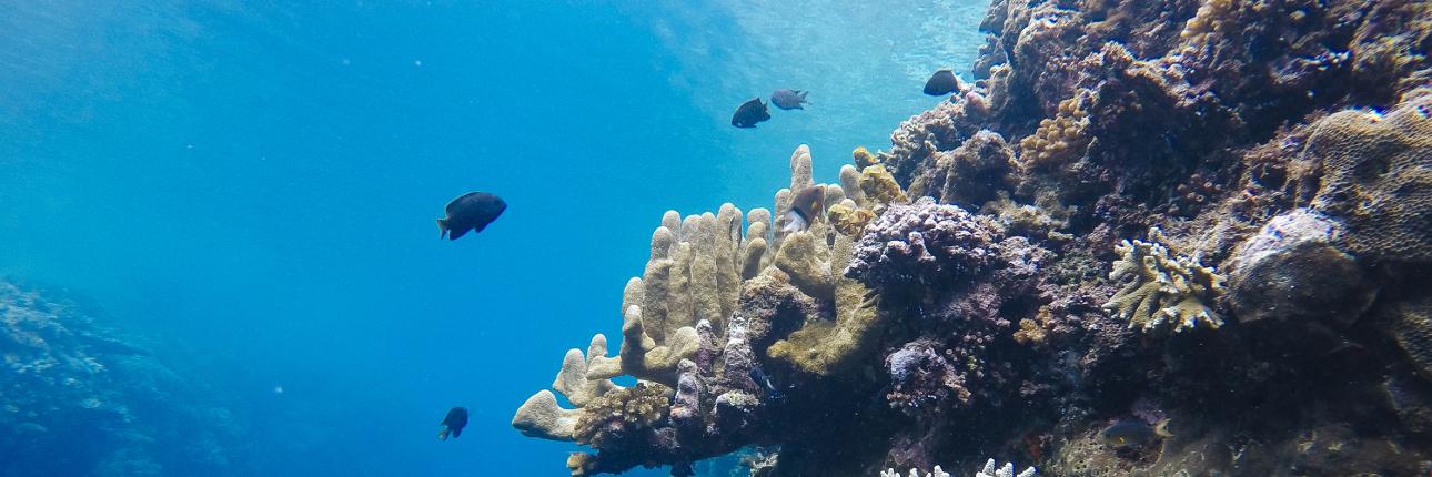 Keindahan Tersembunyi Kedalaman Taman Laut Olele Indonesiakaya Wisata Kab Bone