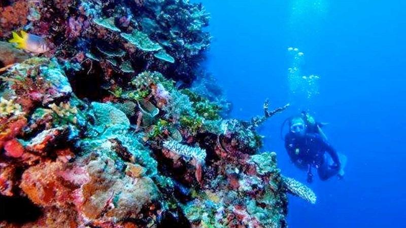 Melihat Keindahan Taman Laut Olele Gorontalo Okezone Lifestyle Https Img