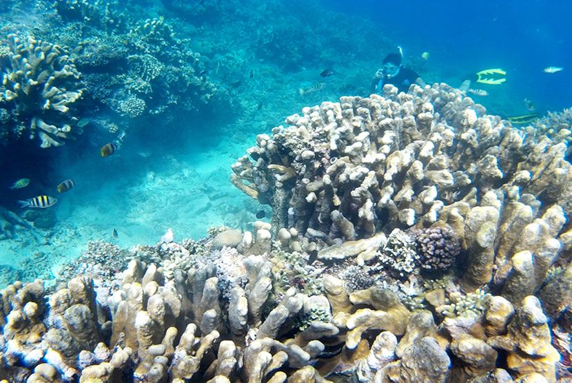 Menikmati Keindahan Taman Wisata Laut Olele Republika Online Wisatawan Suasana
