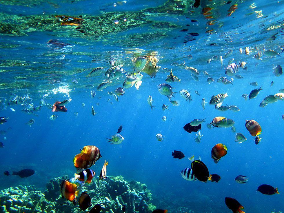Olele Destinasi Anyar Penggila Snorkeling Merawat Indonesia Taman Wisata Laut