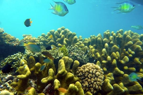Pantai Olele Bolehtanya Taman Wisata Laut Kab Bone Bolango