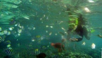 Sembilan Ikan Paus Terdampar Pantai Ujong Kareung Suara Obyek Wisata