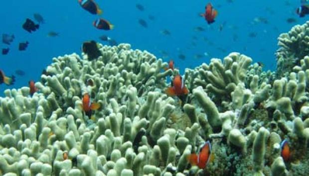 Taman Laut Olele Bersanding Bunaken Travel Tempo Manado Pruwanto Wisata