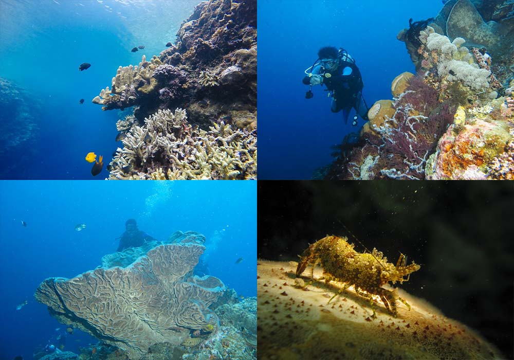 Taman Wisata Laut Olele Provinsi Gorontalo Kamera Budaya Suasana Kab