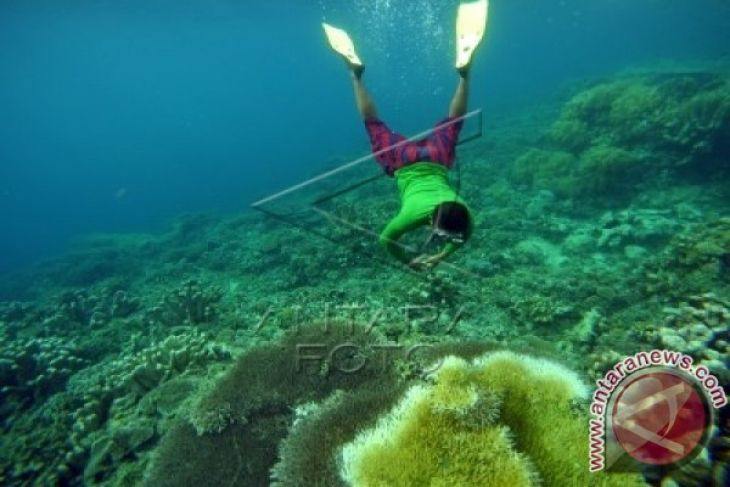 Warga Harap Taman Laut Olele Dikenal Dunia Antara News Gorontalo